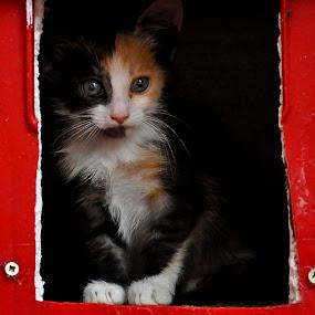 mrnjauuuu by Boricic Goran - Animals - Cats Portraits