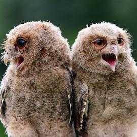 Twin by Ajar Setiadi - Animals Birds
