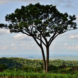 Botucatu SP by Marcello Toldi - Nature Up Close Trees & Bushes