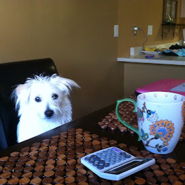 Morning Cup of Coffee by Stephen  Corso  - Animals - Dogs Portraits ( coffee cup )