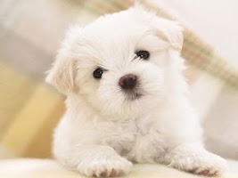 Screenshot of Cute Puppy Dog HD