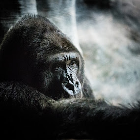 deep thought by Rob Giannese - Animals Other (  )