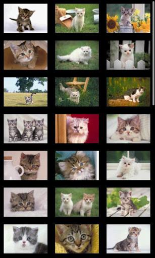 【免費書籍App】ipiks Love cats 3 -kitty eyes--APP點子