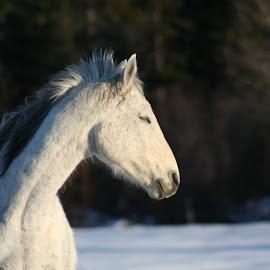 Grace by Lora Treat - Animals Horses