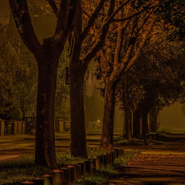 My Street by Lasbi Naboj - City,  Street & Park  Neighborhoods ( fog, street, neighborhood, night, city )