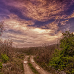 Road to ...... by Luka Milevoj - Landscapes Prairies, Meadows & Fields ( istra, nature, croatia, landscape, bartici )
