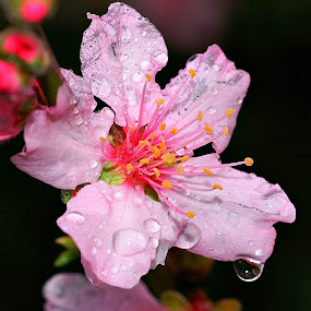 by Tim Bennett - Flowers Tree Blossoms
