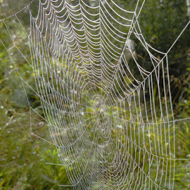 by Rita Bugiene - Nature Up Close Webs