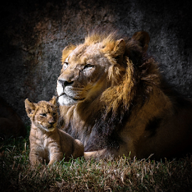 Portraits of the Pride 1 by Gregg Pratt - Animals Lions, Tigers & Big Cats ( african lion )