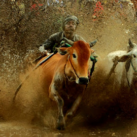 Race on mud by Muhasrul Zubir - News & Events Entertainment