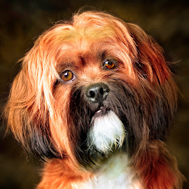 by Jamie Keith - Animals - Dogs Portraits ( animalia, adult, cute, close-up, portrait, natural background, sit, canine, vertebra, adorable dogs, resting, sitting, animal kingdom, pet, mamal, zoology, rest, dog, companion dog, animal, artificial light )