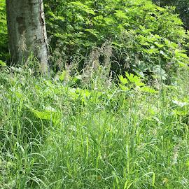 Grass in abundance by B l  Beirne - Nature Up Close Trees & Bushes ( woodlands, anchorage, grass, green, alaska, verdant )