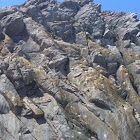 Peregrine  falcons habitat nests morro rock