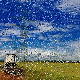 summer by Alexandru Tache - Nature Up Close Water ( blue sky, sharp, summer, rain )
