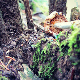 Saturday nature adventure by Suzie Reen - Nature Up Close Mushrooms & Fungi ( mushroom, maine, nature, upclose, forest )