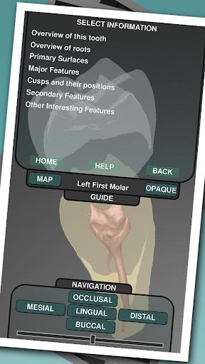 Real Tooth Morphology - screenshot