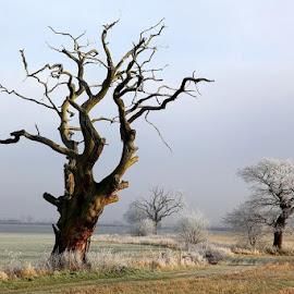 *** by Zanna Zaka - Landscapes Travel ( england, cambridgeshire, weather, trees, travel, travel photography,  )