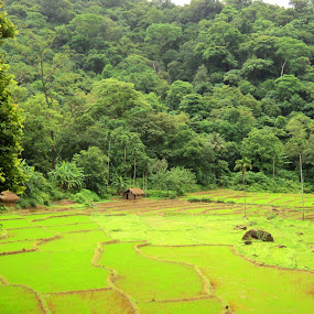 All Green by Uthpala Kuruppuarachchi - Landscapes Prairies, Meadows & Fields ( huts, nature, fields )