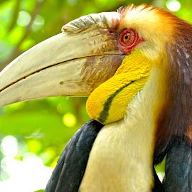 by Edu Yoga - Novices Only Wildlife