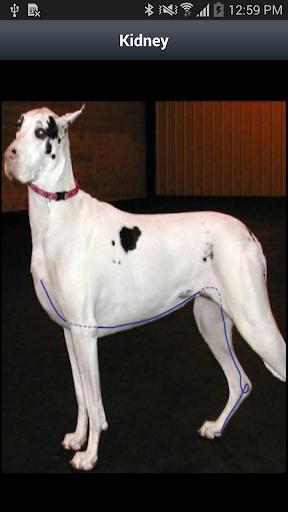 Canine AcuPoints - screenshot