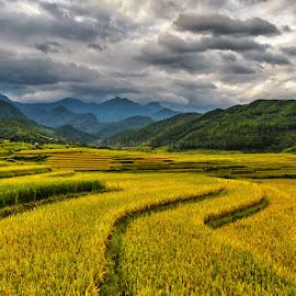 curves by Trang Nguyen - Landscapes Prairies, Meadows & Fields ( field, hill, terrace, mountain, rice, nature, vietnam, travel, place, landscape )