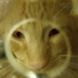 Please Take Me Home by Cheryl Beaudoin - Animals - Cats Kittens ( home, adoption, kitten, cat, animal )
