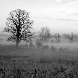 Fog with meadow by Scott Koukal - Landscapes Prairies, Meadows & Fields