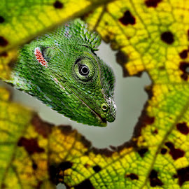 by Nur Santo - Animals Reptiles