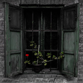 Ancient Window  #2 by Damir Roz - Buildings & Architecture Other Exteriors ( ancient, window, black and white, brick, green, mistic, wall, flower, abandoned )