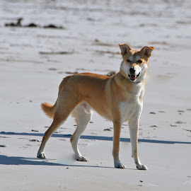 The joy of being on the beach  by Janet Rose - Novices Only Pets