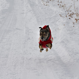 Jasper by Jolie Gordon - Animals - Dogs Running ( dogs, dog,  )