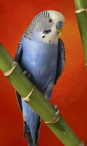 Parrot HD LWP Lite