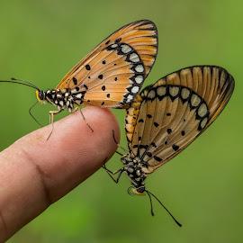 by Syahid Kesuma - Animals Insects & Spiders