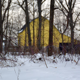 A Splash of Yellow through the Trees by Kim BraineOtt - Buildings & Architecture Homes ( building, winter, nature, barn, snow, forest, woods,  )
