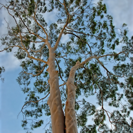 The Tree by Cheryl Squires - Nature Up Close Trees & Bushes ( nature, tree, nature up close, leaves, landscape, tree trunk,  )