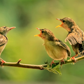 Who Will Come - Father is Coming ? by MazLoy Husada - Animals Birds