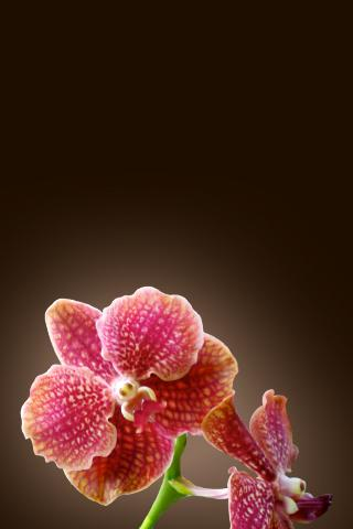 Tropical Orchids Wallpaper