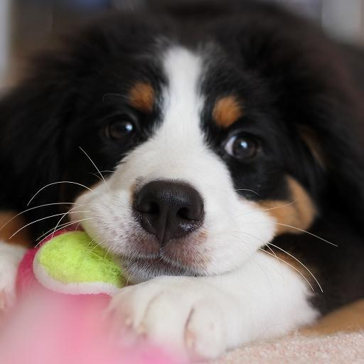 狗訓練工具 生活 App LOGO-APP試玩