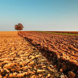 Oaks in fields by Nenad Milic - Landscapes Prairies, Meadows & Fields