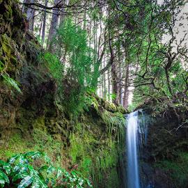 Cascata by Jorge Fernandes - Landscapes Waterscapes ( water, floresta, natureza, verde, cascata,  )