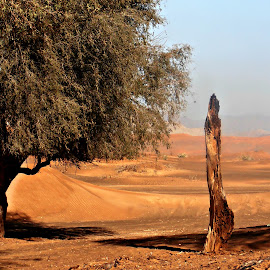 Ghaf Remains by Tamsin Carlisle - Nature Up Close Trees & Bushes ( ghaf, sand, vertical, dunes, desert, trunk, tree, remains, oman,  )