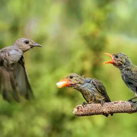 I'll be back again.... by Roy Husada - Animals Birds