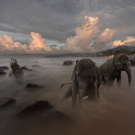 The Awakening by Mikhail Batrak - Digital Art Animals ( elephants, animals, retouching, color, art, beach, surreal, digital, photo, manipulation )