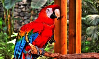Screenshot of Bird Sounds -3D-