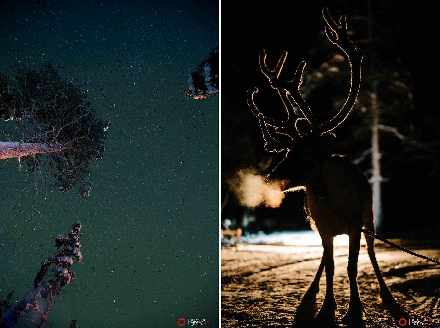 0028 - alohafred Laponie - _5E_0886