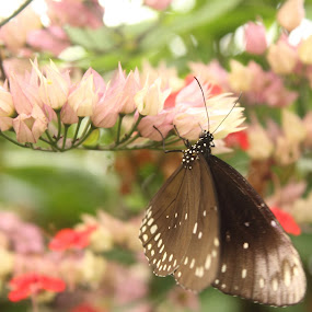 Butterfly Eating by Kelly Lippitt - Animals Insects & Spiders ( butterfly, macro, wings, eating, flower )