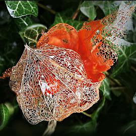 Show Your Magical Shirt by Marija Jilek - Nature Up Close Other plants ( nature, lace lantern, plants, physalis alkekengy, pink lantern, shirt )