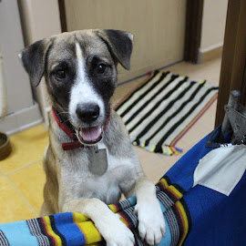 Heeeeeeeeeeee <3 Lovely Puppy <3 I miss Yew thambi <3 by Sunthar Rascal - Animals - Dogs Portraits