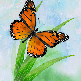 by Charlie Alolkoy - Illustration Flowers & Nature ( butterfly, fly, monarch, grass )