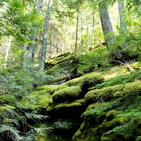 Luscious Greens by Denver Pratt - Nature Up Close Trees & Bushes (  )